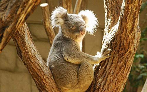 ZXSDFV Puzzle 1000 Teile DIY Holzpuzzles Erwachsene Kinderpuzzle Klassisches Puzzle Koala 1000-Teiliges Puzzle Für Erwachsene Familienspiel Teambuilding Geschenk