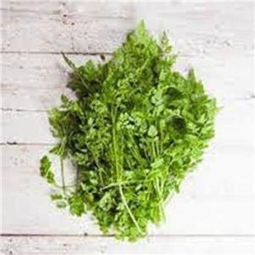 Cerfeuil Herb Graines, biologique, sans OGM, plus de 100 graines par paquet