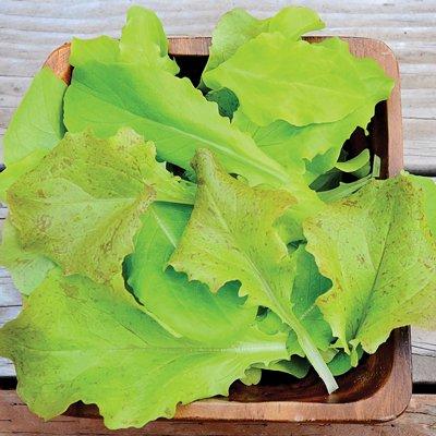 4 grammes Graines de Super Gourmet Salade Mélange