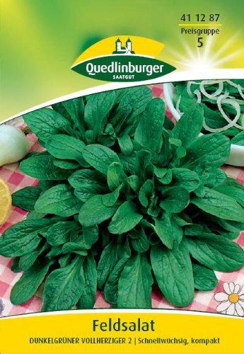 Feldsalat, vollherziger Dunkelgrüner 2