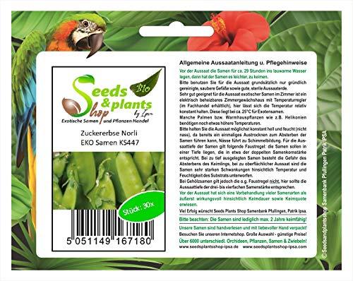 Stk - 30x Zuckererbse Norli EKO- Erbsenschoten Samen Gemüse Erbsen KS447 - Seeds Plants Shop Samenbank Pfullingen Patrik Ipsa