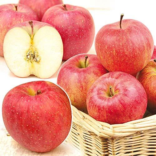 国華園 山形産 みちのくふじ 10kg りんご リンゴ サンふじ