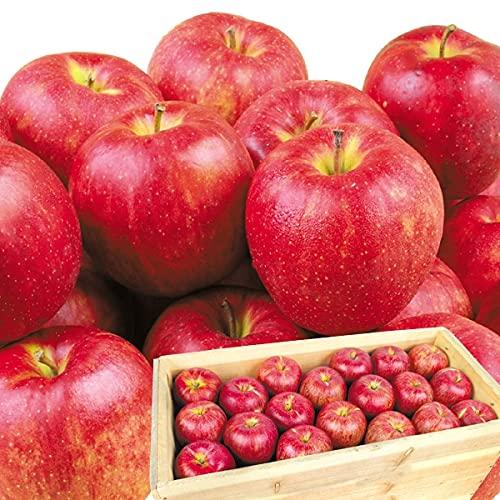 国華園 りんご 青森産 ジョナゴールド 木箱 約20�s 1箱 食品