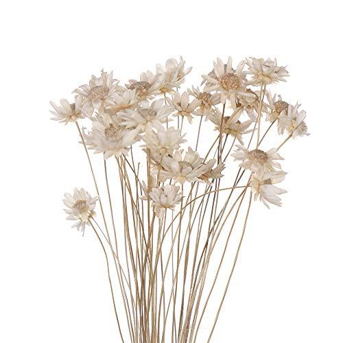Ramo de flores secas decorativas, mini margaritas pequeñas, ramo de flores naturales para preservar flores para decoración del hogar de boda blanco