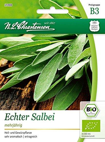 Bio Echter Salbei 'Salvia officinalis' Saatgut Samen (Heil- und Gewürzpflanze)
