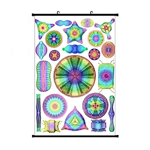 Ernst Haeckel Rainbow Diatoms Apron Anime Living Room Bedroom Home Decoration Gift Fabric Wall Scroll Poster (16x24) Inches