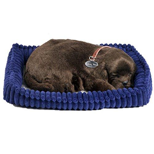 plenty gifts 96231 Perfect Petzzz Soft Chocolate Labrador, Pluche, Universel, Taille Unique
