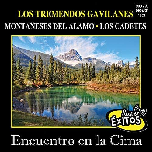 Los Tremendos Gavilanes, Los Montañeses Del Alamo & Los Cadetes