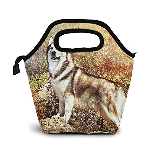 Bolsa Térmica Comida Bolsas De Almuerzo para Mujeres Hombres Niñas Niños Bolsa Isotérmica De Almuerzo Malamute de Alaska