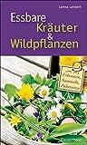 Essbare Kräuter und Wildpflanzen: erkennen, sammeln und zubereiten