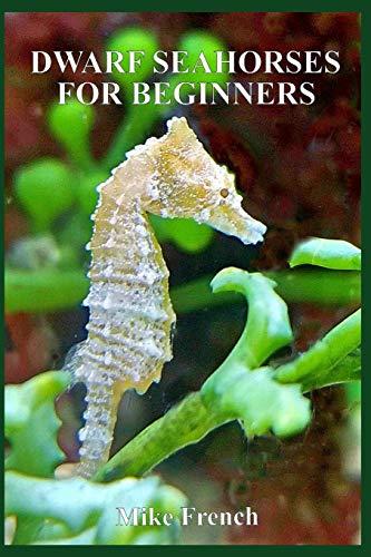 Dwarf Seahorses For Beginners