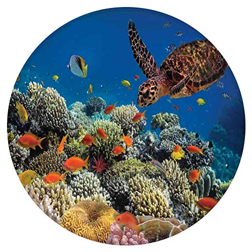 Ocean Round Area Rug,Fishes Old Turtle Hawksbill Floats Under Water Coral Reefs Dahab Red Sea,for Living Room Bedroom Dining Room,Round 5'x 5',Blue Orange and Brown