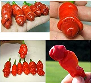 Garden Plants Peter Pepper Seeds red hot Chili Peppers 20 Seeds/pa