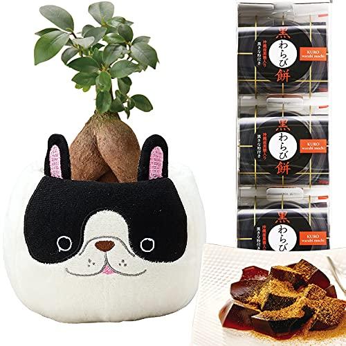 花のギフト社 ガジュマルの木 多幸の木 ブルドッグ バスケット わらび餅 黒糖 きな粉 観葉植物 鉢