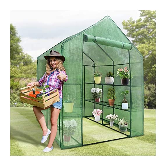 """Mini Walk-in Greenhouse Indoor Outdoor -2 Tier 8 Shelves- Portable Plant Gardening Greenhouse (57L x 57W x 77H Inches… 5 【Strong Construction】This mini walk-in greenhouse is built with high quality metal frame with powder coating, durable bearing net on each layer is strong enough to hold more seed trays, pots and plants growth. The clear waterproof PE cover protects plants from frost or pests while allowing nourishing sunlight to pass through. 【Indoor Outdoor Greenhouse】Waterproof and UV protection, ideal growing environment , can be used indoor and outdoor at all seasons. Perfect for protecting young plants or extending the plant growing season. 【Portable & Easy Setup】Overall Dimensions: 57""""L x 57""""W x 77""""H, Perfect Size for Easy Moving to Indoor or Outdoors. Easy to assemble, no tools required. Enjoying a lot of fun of the flowers and plants in your leisure time!"""