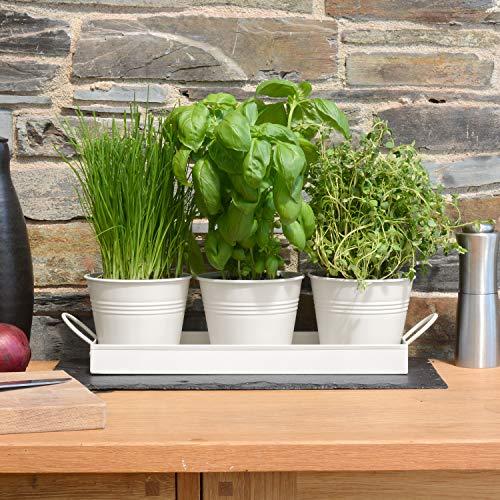 Ckb Ltd Pflanztöpfe für Kräuter, Metall, mit Abtropfschale, traditioneller Fensterbank, für die Küche, zum Anpflanzen eigener Kräuter zum Kochen, 3 Stück