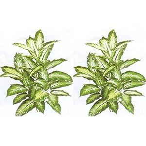 "Silk Flower Arrangements Sejahtera Group 2 Artificial 40"" Silk Plant Arrangement Palm Tree Bush Flower Floral Fake DIEFF, Green"