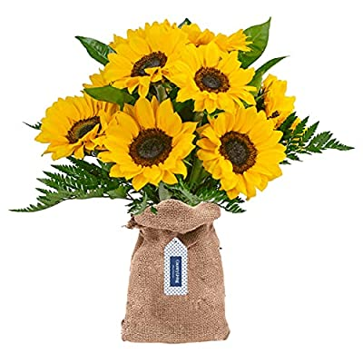 Country Living Floral Collection by Colour Republic Premium Fresh Cut Sunflower Bouquet, 17 Stems, Yellow Mix by Country Living