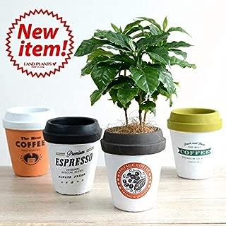 LAND PLANTS コーヒーの木 コーヒーカップ型 陶器鉢 Mサイズ【ホワイト×ブラウン】