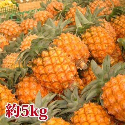 沖縄産「スナックパイン」 約5kg(4〜6個) チルド便込み