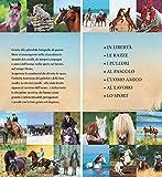 Zoom IMG-2 il libro dei cavalli