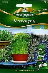 Premium Katzengras
