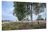 Leinwanddruck Heide Birken Größe: 90cm x 135cm | Leinwand
