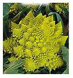inception pro infinite 4000 c.ca semi cavolo broccolo romanesco - romano - medio tardivo - brassica oleracea - in confezione originale - prodotto in italia - cavolfiori - cf008