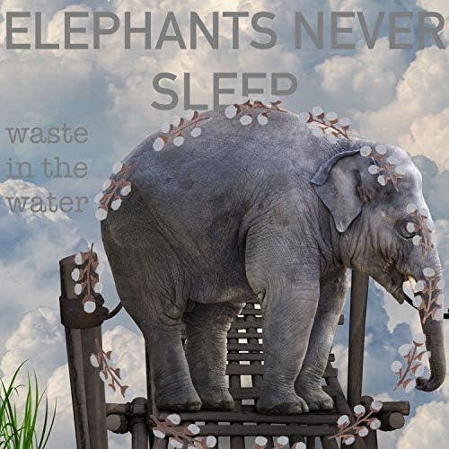 Elephants Never Sleep