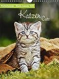 Katzen Wochenkalender 244819 2019: Foto-Wochenkalender