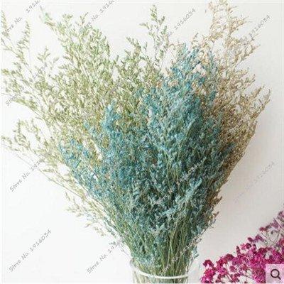 Exotique Herbe Saint-Valentin Graine Heirloom Bonsai Plante, La Germination Taux 95% Colorful Flower Seed Living Room Decor 100 Pcs 2