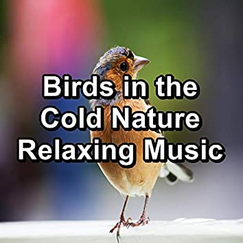 Birds in the Cold Nature Relaxing Music