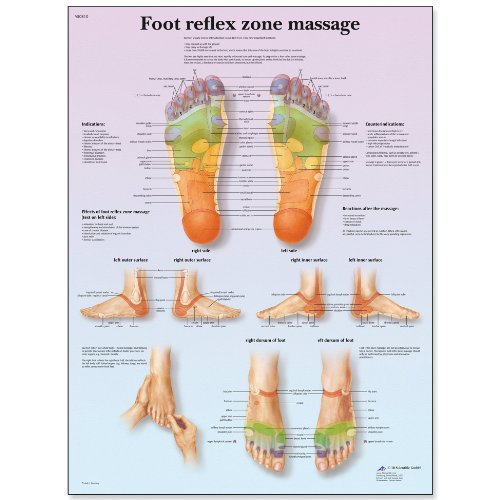 3B Scientific VR1810L Glossy UV Resistant Laminated Paper Foot Reflex Zone Massage Anatomical Chart, Poster Size 20