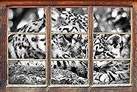 KAIASH 3Dウォールステッカー3Dルックウォールまたはドアステッカーウォールステッカーウォールステッカーウォールデコレーション62x42cmの若い動物の窓が付いたモノクロームヒョウ