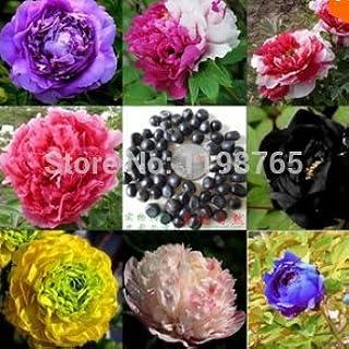 comprar comparacion 10 semillas/bolsa de 24 colores Peony de las semillas de flor macetas jardineras peonías semillas de bonsái plantas Semill...