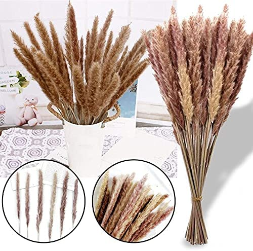AriesDCHAT Fixed price Rapid rise for sale 30 50pcs Photography Pampas Natural Brown Gras Flower