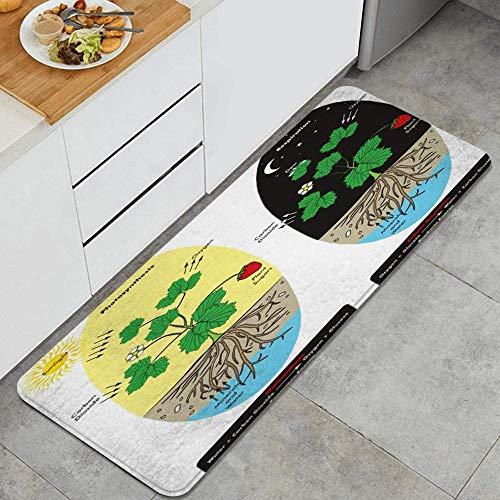 PATINISA Alfombra de Cocina,Fotosíntesis Respiración Celular Rocío Vegetal Durante la educación de comparación científica,Antideslizante Estera Lavable Alfombrillas Absorbentes alfombras,120x45cm