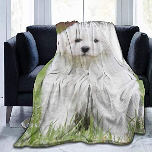Manta de Microfibra Ultra Suave, Mantas acogedoras con Borde Cosido para Perros Bichon Frise, Alfombra térmica portátil de Felpa para sofá Cama