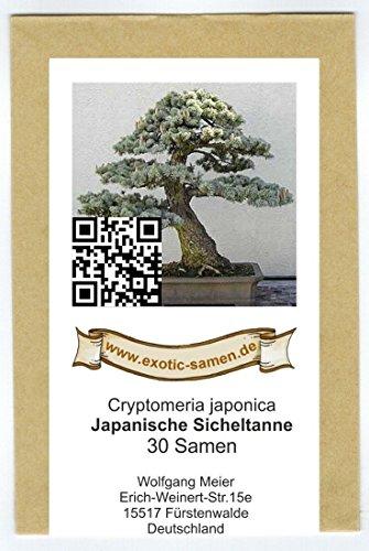 Bonsai - Cryptomeria japonica - Japanische Sicheltanne (30 Samen)
