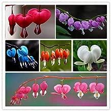 ADB Inc 7 Type 2015 HOT Sale 150pcs Heart Flower Seeds Dicentra Spectabilis Sweet Heart (Heart 01 Mix)