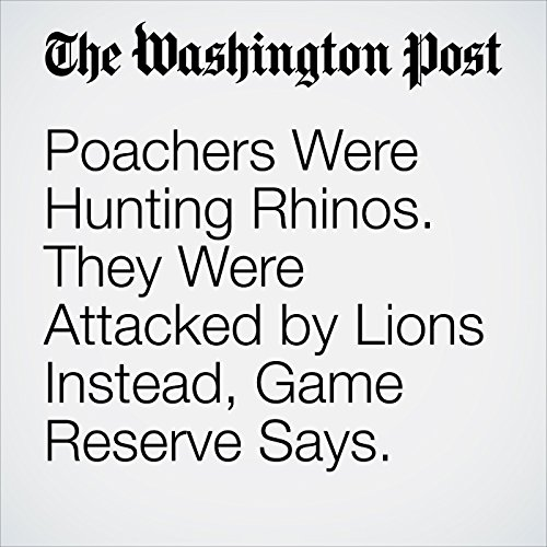Poachers Were Hunting Rhinos. They Were Attacked by Lions Instead, Game Reserve Says. copertina