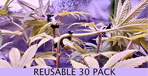 Engineered Essentials (30 PK) 90 Degree Plant Trainer for Low Stress Training (LST) to Replace Plant Trellis Scrog net Plant Bender (Full Size)