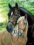 TYUAC DIY digitales ölgemälde Zwei Pferde malen nach Zahlen leinwand Zimmer wohnkultur kein Rahmen für Erwachsene und Kinder Gemälde 16x20 Zoll.(kein Rahmen)
