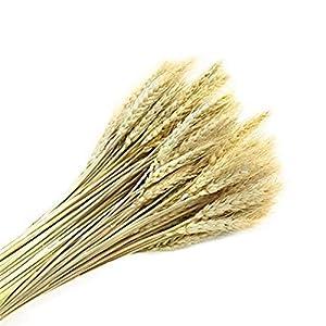yuiop 100pcs artificial natural wheat dried, flower bunches arrangements diy home kitchen table wedding flower bouquet centerpieces decorative, 20-24 inch length silk flower arrangements
