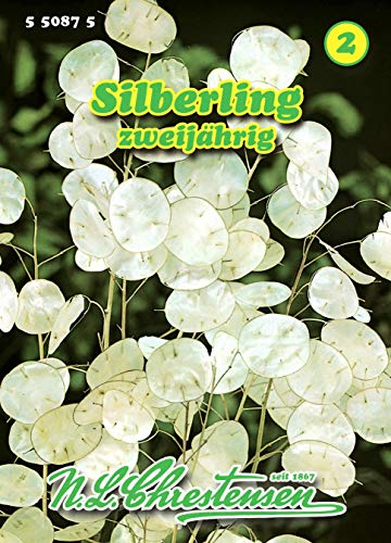 Lunaria annua, Silberling zweijährig N.L.Chrestensen Samen 550875-B