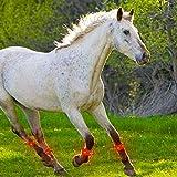 Arzja 10Pcs Leggings LED per Cavalli Cinghie Legate Cinghia Decorativa Visibile Notturna Attrezzatura per Cavalli Gambali di Sicurezza Fasciatura Accessori per Equitazione,Rosso