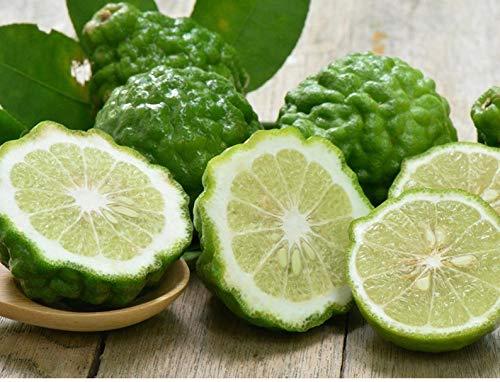 10S-e-e-ds Kaffir Lime S-e-e-ds Lemon S-e-e-d