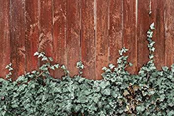 DORCEV 8x6ft Brown Vintage Wood Wall Photography Backdrop Green Ivy Leaves on Rustic Wooden Board Background Wedding Party Bridal Shower Kids Adults Portraits Photo Studio Props