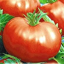 Seeds4planting - Seeds Tomato Russian Hercules - Organic