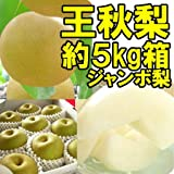 【ジャンボ王秋梨】福島県産 かやば 梨 (約5kg箱約9~12玉入) 1玉400g以上の大きな梨